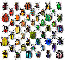 Jennifer Ivory – humanity's dependence on insects