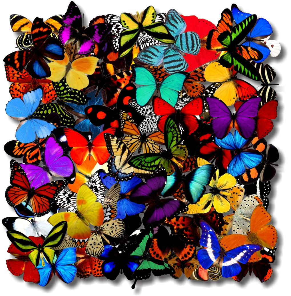 """""""Celebration"""" by Jennifer Ivory. Mixed media. Copyright 2015, Insectworks. Courtesy of the artist."""