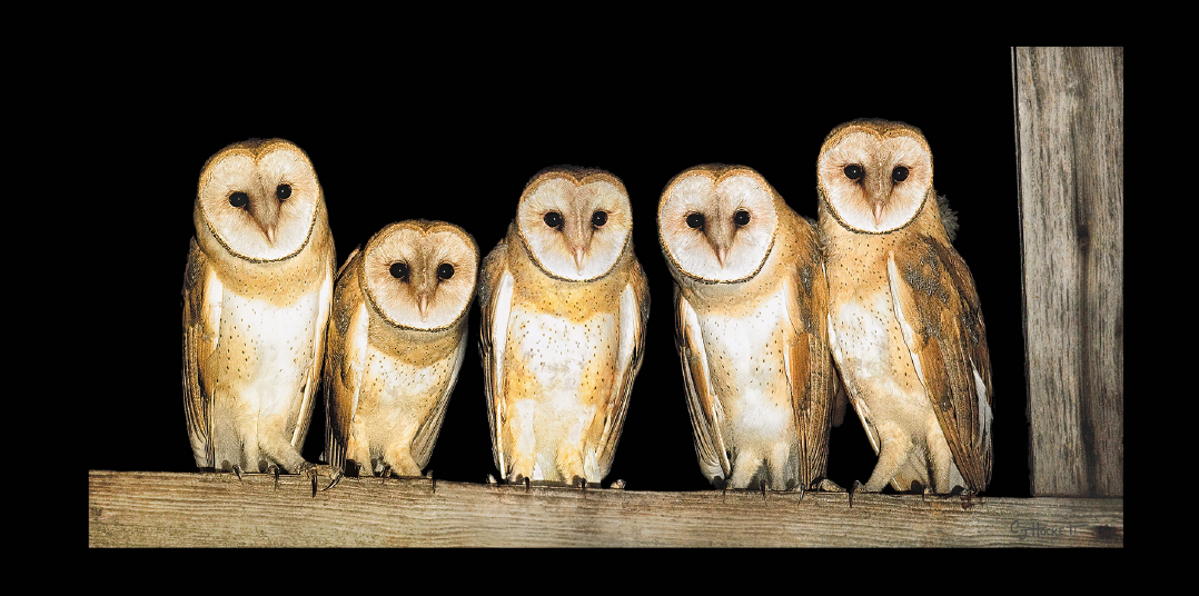 """Owls"" by CJ Hockett. Photograph. Copyright CJ Hockett 2017. Courtesy of the artist."